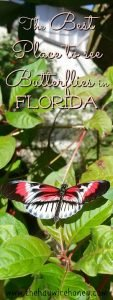 butterfly world, florida. The best place to see butterflies in florida, go for a fun family activity.